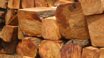 Permalink to: Sciage de bois à façon